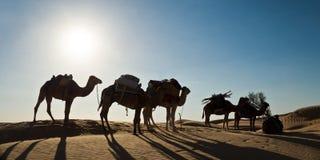 骆驼有蓬卡车的剪影在沙丘的-南突尼斯 免版税库存照片