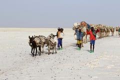 骆驼有蓬卡车运载的盐在非洲` s Danakil沙漠,埃塞俄比亚 免版税库存照片