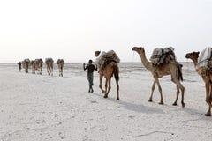 骆驼有蓬卡车运载的盐在非洲` s Danakil沙漠,埃塞俄比亚 图库摄影