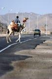 骆驼横穿路 免版税库存图片
