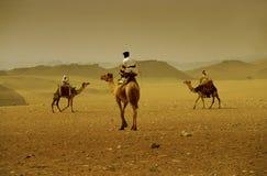 骆驼横穿 图库摄影