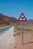 骆驼横穿 库存照片