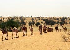骆驼毛里塔尼亚 免版税库存照片