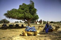 骆驼牧民 免版税图库摄影