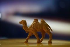 骆驼玩具 库存图片