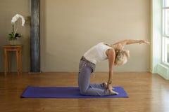 骆驼瑜伽yogini 库存照片