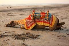 骆驼疲倦了 免版税图库摄影
