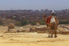 骆驼的人反对开罗都市风景  免版税库存图片