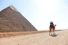 骆驼的人在金字塔 免版税库存照片