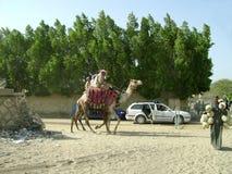 骆驼的埃及人 图库摄影