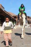 骆驼的女性游人 免版税库存图片