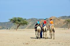 骆驼的游人 免版税库存照片