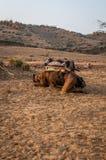 骆驼睡觉 免版税库存图片