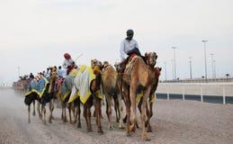骆驼种族,多哈,卡塔尔 免版税库存图片