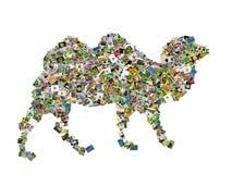 骆驼符号 库存图片