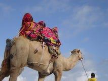 骆驼肯尼亚 免版税库存图片