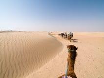 骆驼行程 免版税库存照片