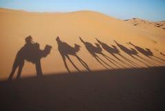 骆驼车手影子 免版税库存照片