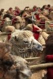 骆驼队在敦煌 图库摄影