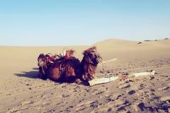 骆驼队 库存图片