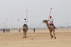 骆驼马球在Jaisalmer 库存照片