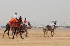 骆驼马球在Jaisalmer 免版税图库摄影