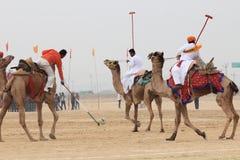 骆驼马球在Jaisalmer 库存图片