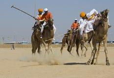 骆驼马球 库存照片