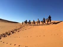 骆驼骑马在撒哈拉大沙漠 免版税库存图片