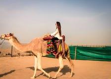 骆驼骑马在科威特 免版税库存照片
