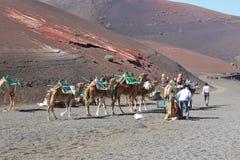 骆驼骑马在Timanfaya国家公园,兰萨罗特岛 免版税库存图片