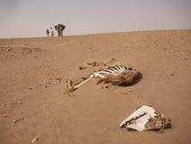 骆驼骨头废弃物有蓬卡车通过的地方 免版税图库摄影