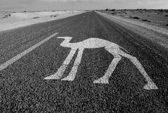 骆驼高速公路 库存照片