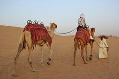 骆驼离开二 库存照片