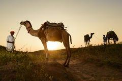 骆驼贸易商 免版税图库摄影