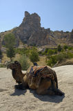 骆驼cappadocia 免版税库存照片