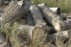 经验丰富的木柴 免版税库存图片