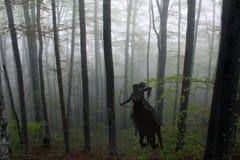 骑一匹马的亚马逊战士妇女的剪影在森林里 免版税图库摄影
