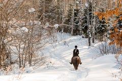 骑一匹马的年轻美丽的女孩骑师在冬天森林里 图库摄影