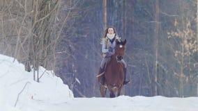 骑一匹黑马的年轻女性车手通过漂泊在冬天结冰的森林里 库存照片
