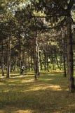 骑一辆自行车的一个人在森林里 免版税库存照片