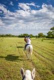 骑乘马在潘塔纳尔湿地,巴西 免版税库存图片
