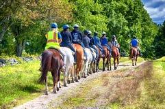 骑乘马在Topsmead国家公园 库存图片
