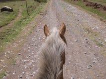 骑乘马观点 免版税库存照片