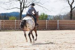 骑在桶赛跑的事件的年轻女牛仔一匹美丽的油漆马在圈地 免版税库存图片