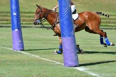 骑在目标的马球球员马 免版税库存照片
