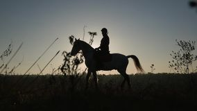 骑在背景日落的妇女的剪影一匹马 慢的行动 侧视图 股票录像