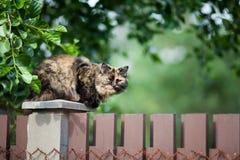 骑墙观望的猫 免版税库存照片