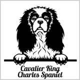 骑士国王查尔斯狗-偷看狗-品种在白色隔绝的面孔头 皇族释放例证