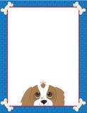 骑士查尔斯框架国王西班牙猎狗 免版税库存图片